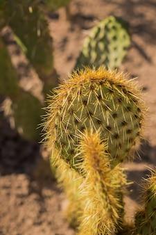 Зеленый кактус в пустыне