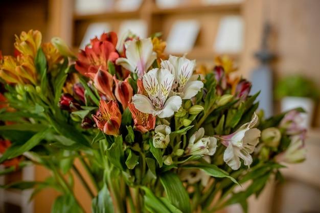 アルストロメリア、色とりどりのアルストロメリアの花