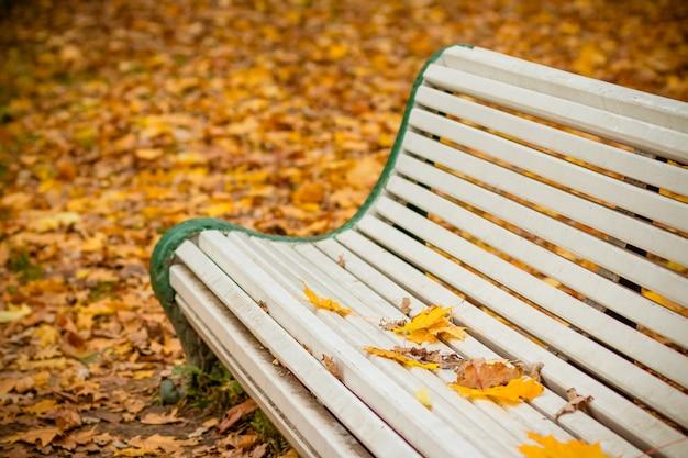 秋の公園の白いベンチ。