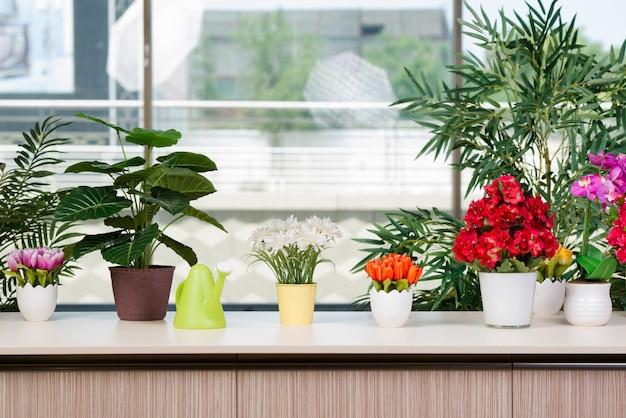 Различные цветы в горшках