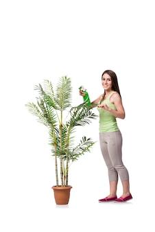 白で隔離される植物の世話をする女性