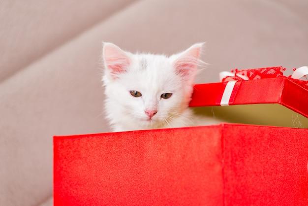 赤い箱の中に白猫
