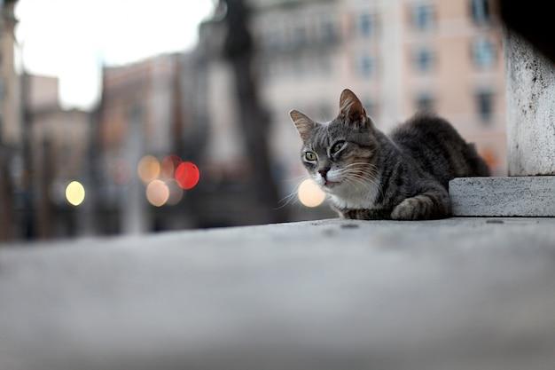 地面に横たわって悲しい通り猫