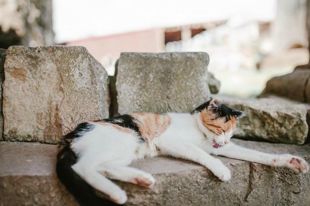 Трехцветный кот лежит на улице