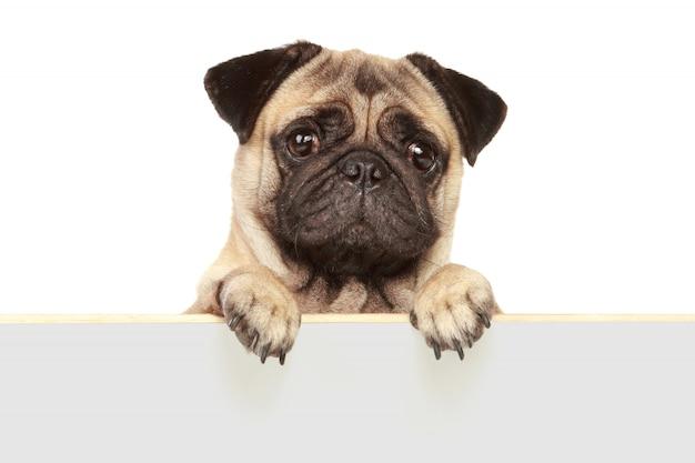 Собака собака