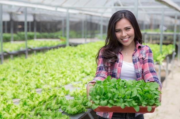 小さな緑の植物を保持している女性