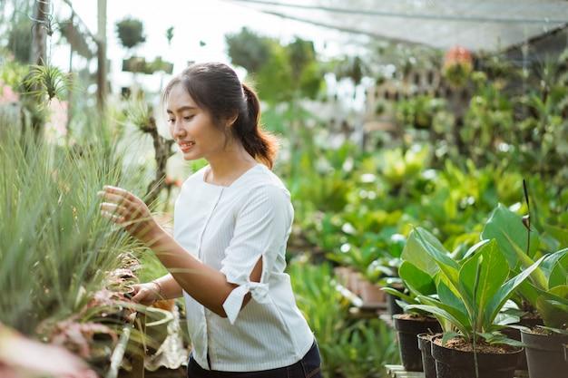 仕事で庭師、緑の植物の世話をする