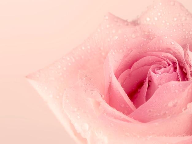 ピンクのバラの穏やかな背景