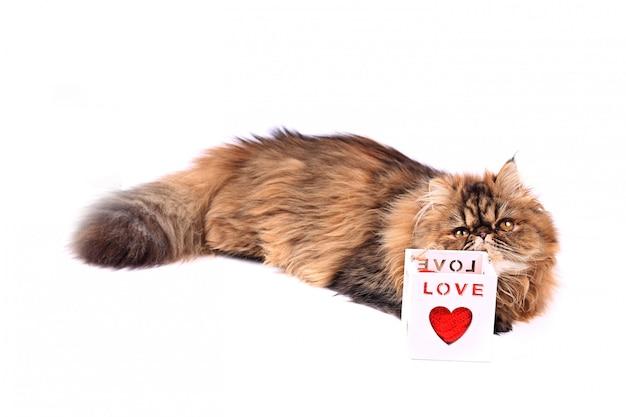 白い背景で隔離の心ギフトボックスを持つ猫。トリコロールペルシャ猫