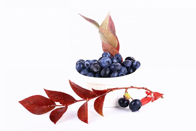 Ветка черники с листьями и ягодами на белом фоне