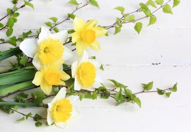 Весенние цветы нарциссы ветви березы на белом фоне