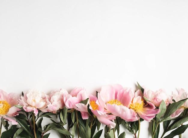 白い背景とテキストのオープンスペースに分離されたピンクの牡丹の境界線。植物学の背景。上面図