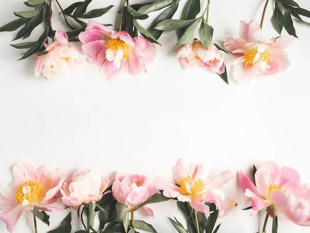 白い背景とテキストのオープンスペースに分離されたピンクの牡丹フレーム。植物学の背景。上面図