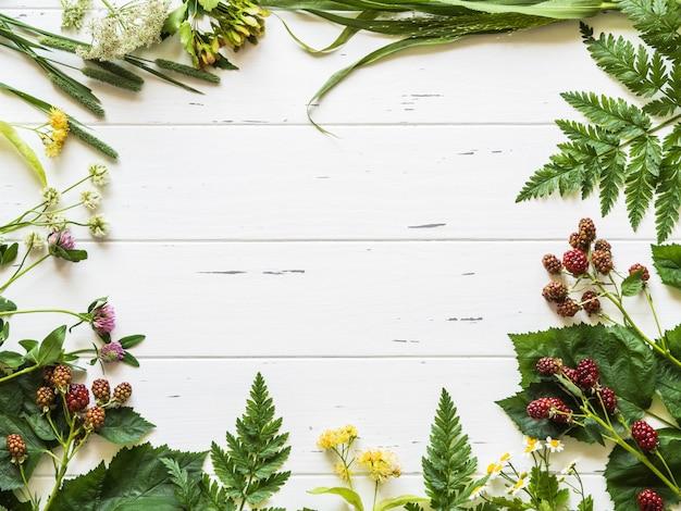 ブラックベリー、カモミール、シナノキの花、ウッドの背景にクローバーの植物のフレーム。新鮮な野生のハーブと素朴な白い背景の上面に花からフラットレイアウト構成