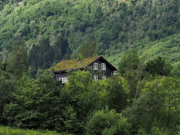 Дом в лесу, в горах с растениями на крыше.
