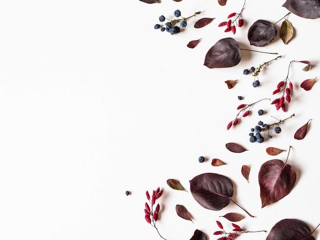 さまざまな果実と白で隔離される野生の木の境界線の葉