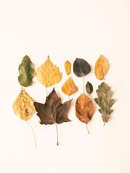 白い背景に分離された野生の木フレームの様々な葉