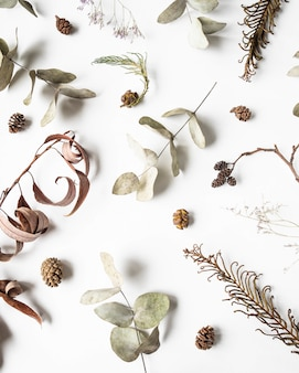 冬の乾燥した植物の部分-アルダー、シダ、ユーカリ、柳のフラットレイアウト創造的な自然な背景