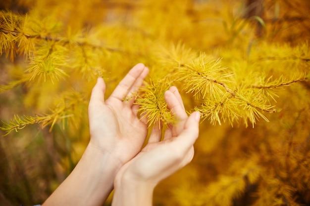 フォレスト、ツリーの黄色の木と黄金の秋