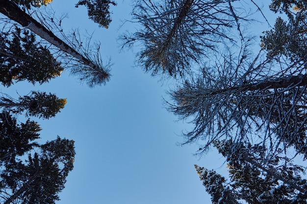 暗い森の夜は、クリスマス前に木を歩く