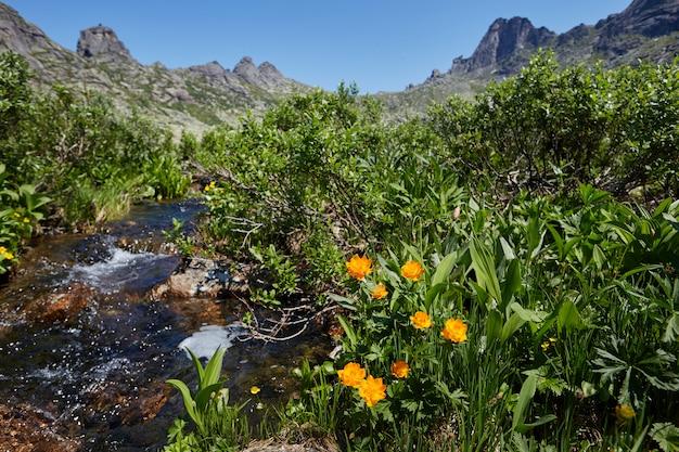 渓流の近くで珍しい山の植物や花が育つ