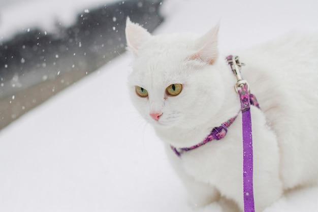 自然の中で雪の中で歩くかわいい白いふわふわ猫