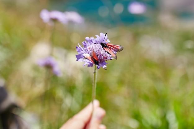 コーカサス山脈の斜面に生えている珍しい山の花と植物