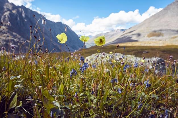 Путешествие пешком по горным долинам, красота дикой природы, алтай