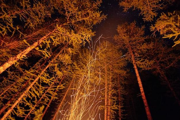 空を飛んでいる森の中でたき火の夜から火花。星空の下で森の中で火
