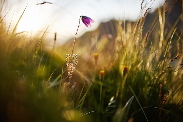 日没のマクロ写真のクローズアップで風に揺れる草の葉