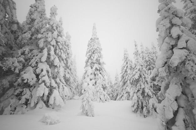 森の中で雪の朝。雪に覆われた森の木。すべてが雪で覆われている
