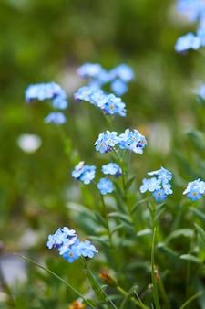 晴れた夜明け、コーカサス山脈の斜面に生えている珍しい山の花と植物。小さな美しい野生の花
