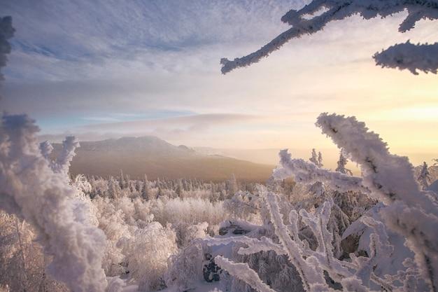 凍った木の雪に覆われた丘からの眺め