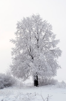 Все покрыто снегом сказочное рождество