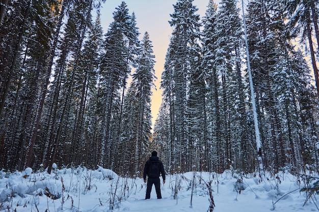 暗い森、クリスマス前に森の中を歩く