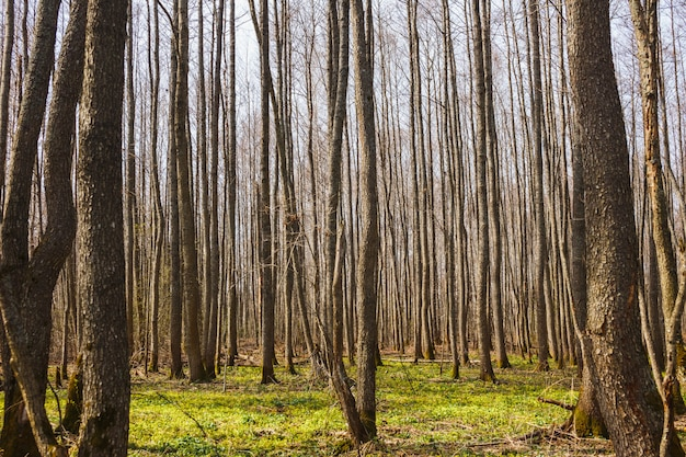 春の裸の森