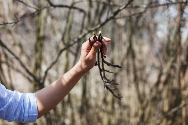 少女の手の中にリンゴの木の小枝