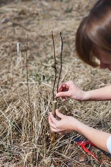 女の子は早春に野生のリンゴの移植片を作る