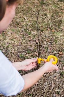 庭に木を接ぎ木するプロセス