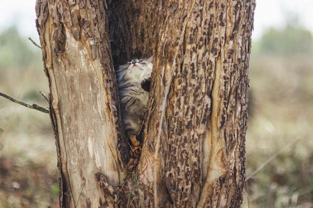 Летом пушистый котенок в дупле дерева