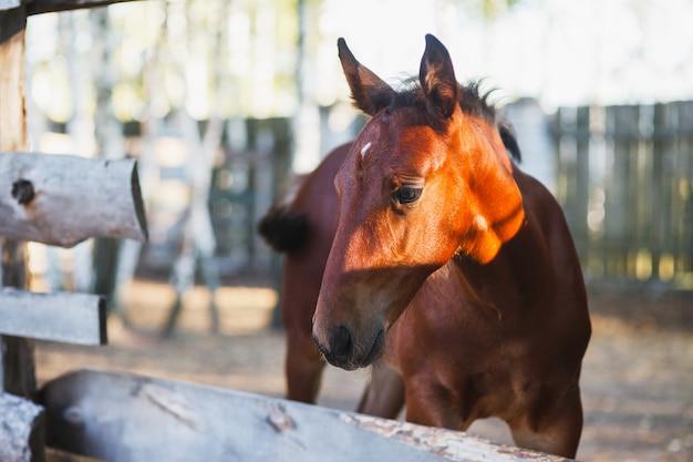 遊び心のある子馬が鳥小屋から私たちを見ています