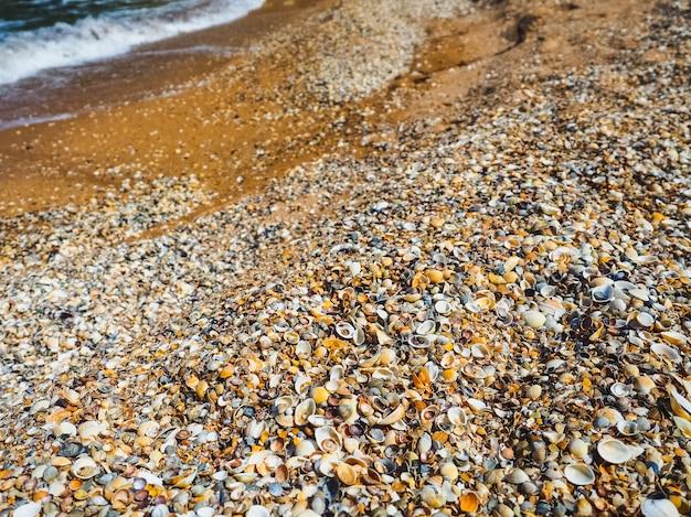 貝殻の海の上のビーチ。貝殻の背景。