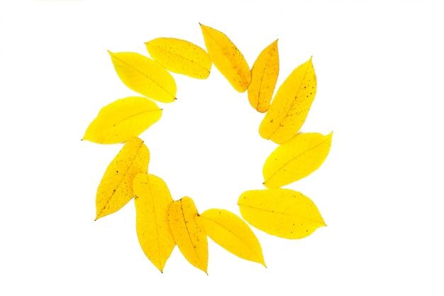 サークルとコピースペースで黄色の葉