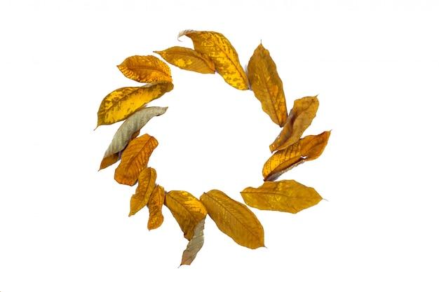 周りに分離された白いフレームに置かれた秋の乾燥葉