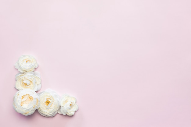 白い花の組成ピンクの背景