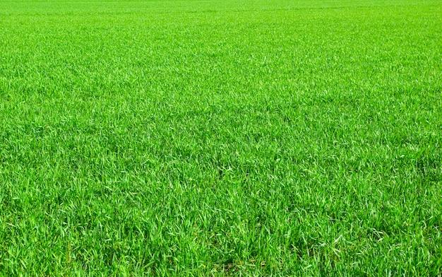 Зеленый газон фон