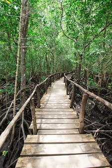 Садовая деревянная дорожка в окружении растений