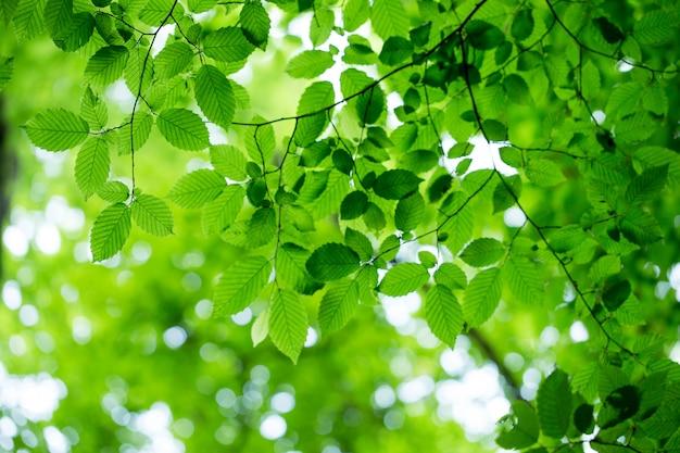 木にリーンの葉