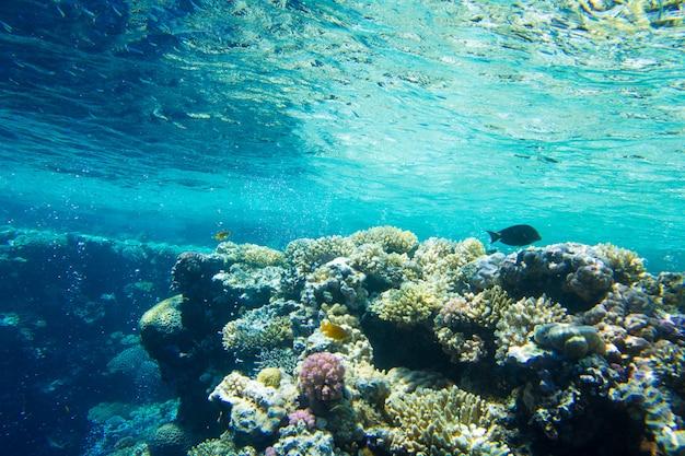 Спокойная подводная сцена
