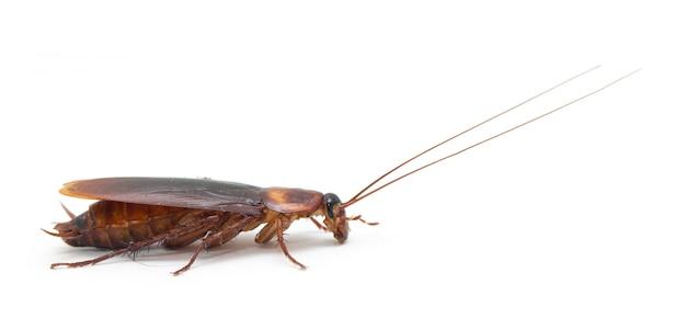 Отвратительный таракан